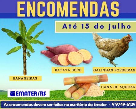 Encomendas de mudas de banana, cana de açúcar e batata doce podem ser feitas até 15 de julho